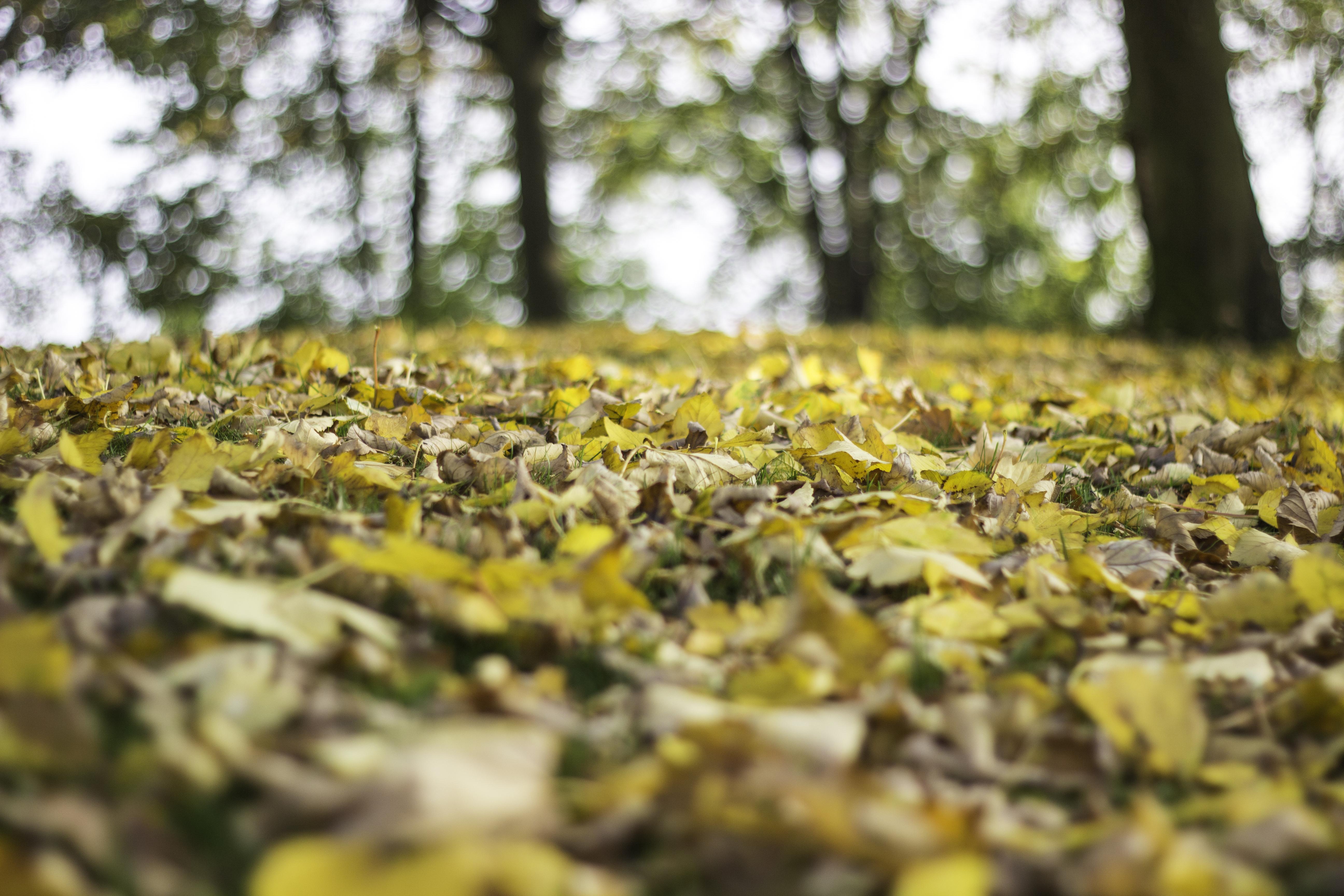 Blätter am Grund